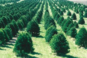 trees-dynamic-in-business