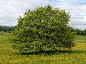 tree-dynamic-in-business