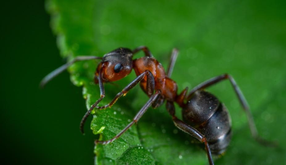 close up ant