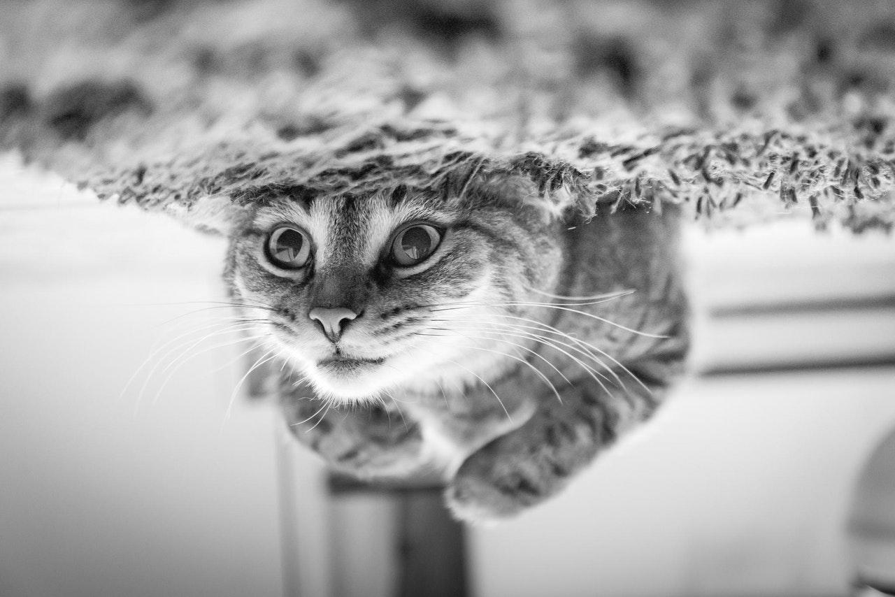 Upside-down cat